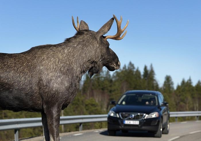 Страховка в финляндию